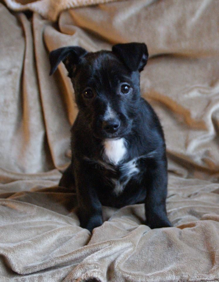 Adopt Jordan On With Images Dachshund Mix Puppy Adoption Adoptable Dachshund Dog