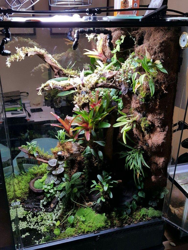 Adeljean Ho S Viv Mit Bildern Gecko Vivarium Reptilien Terrarium Terrarien