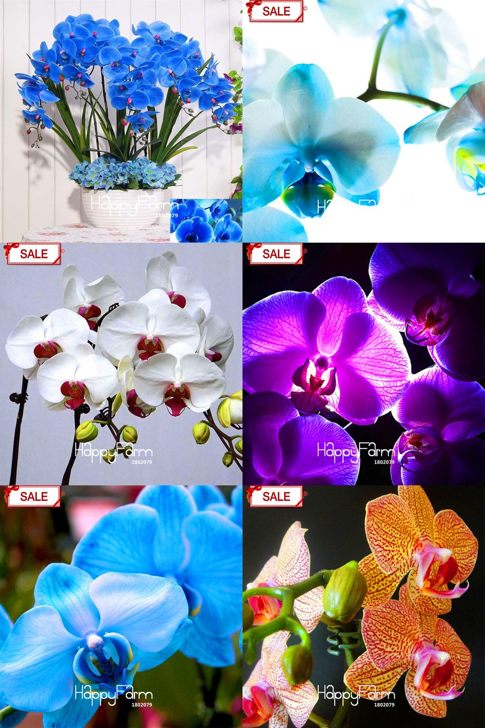 Visit To Buy Hot Sale9 Varieties Phalaenopsis Seeds Perennial