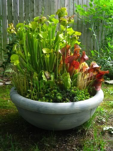 Outdoor bog container garden another great way to add for Planting pond plants in containers