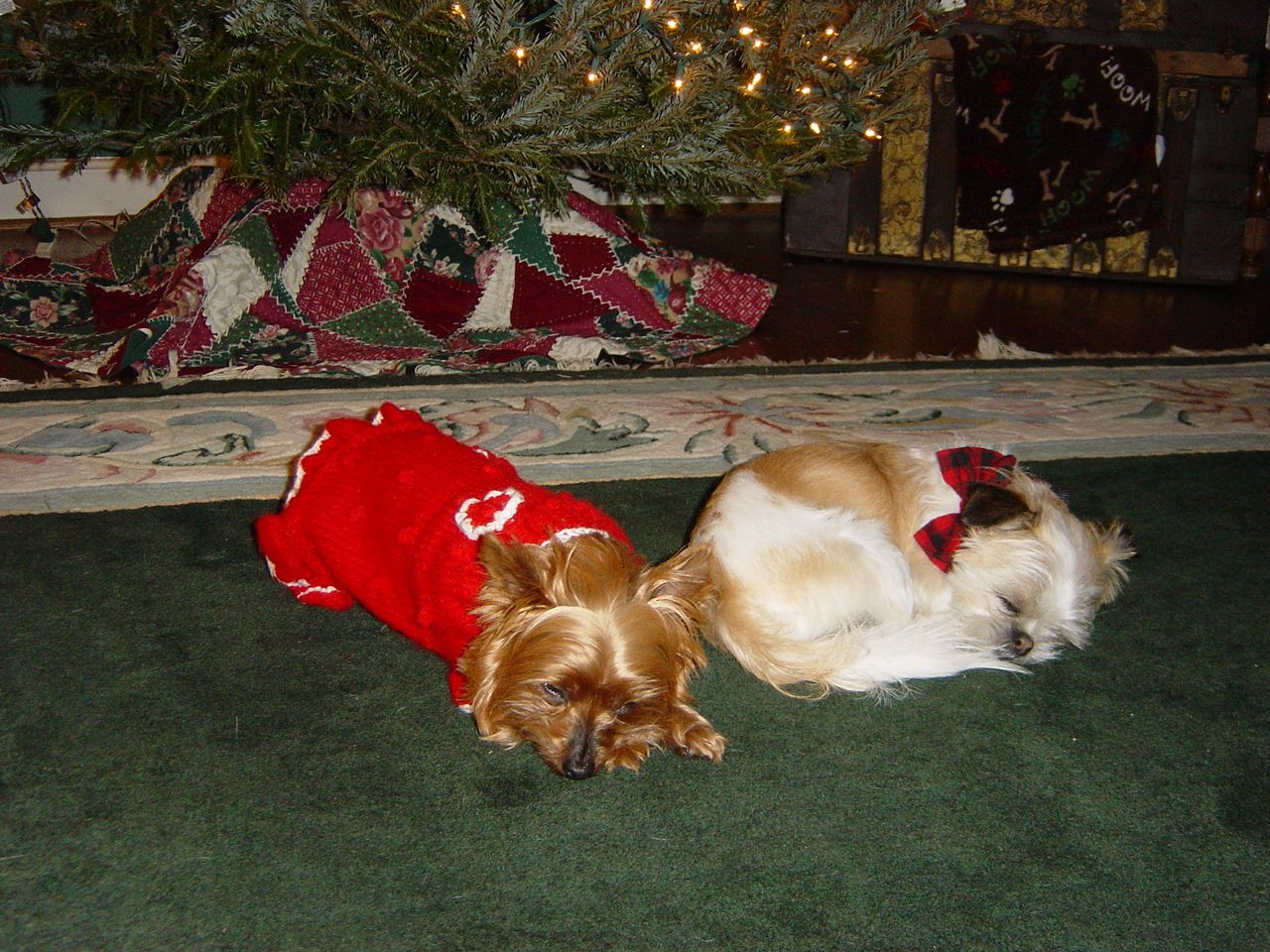 Tired Pups From All The Picture Taking Dogs Christmas Dog Pup