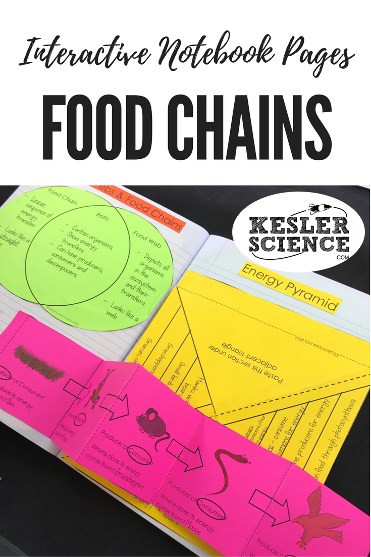compare and contrast food webs and food chains with a venn diagram graphic organizer identify organism relationships producer consumer and energy  [ 735 x 1102 Pixel ]