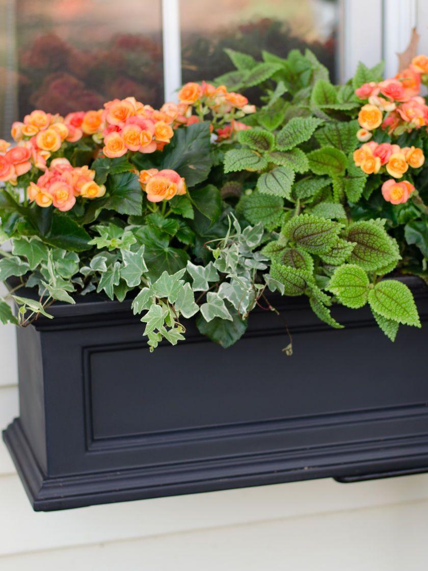 d1fbc696b0581d0a1c13134cc8f220dd - Gardeners Supply Self Watering Window Box