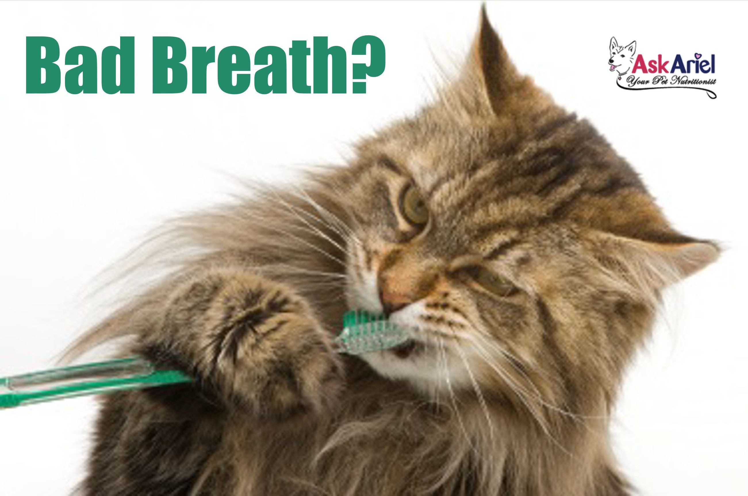 Does your kitty have bad breath? Halitosis along with