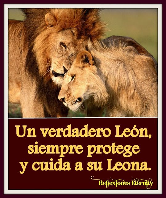 Imagenes De Leones Con Frases De Amor 7 Mis Leones Pinterest Leo