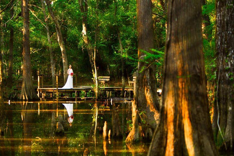 Beautiful Bride, Botanical Gardens, Brides, Mercer Arboretum, Gardening,  Amazing, Search, Photography, The Large