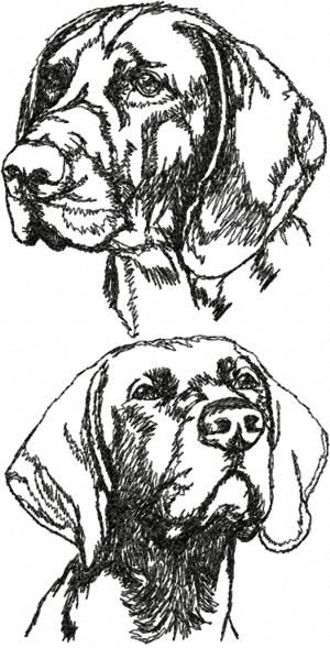 Advanced Embroidery Designs Bernese Mountain Dog Set Animal - pointer animal coloring pages