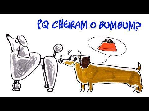 Manual do Mundo - Por que cachorro cheira o bumbum do outro? Dúvida Cruel #12