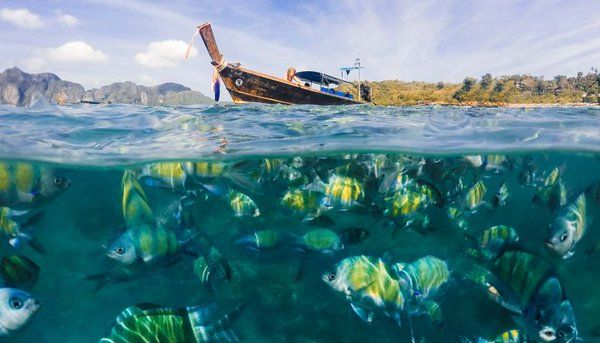 An incredible picture... really two incredible pictures in just one shoot! :) #fish #boat #sea