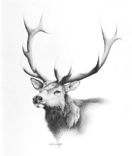 """ The Prince "" Elk By Bill Langis"