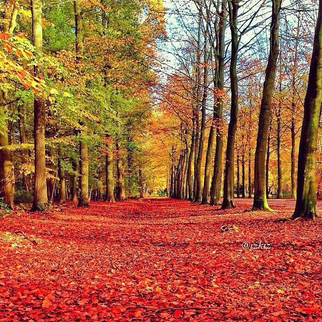 Otoño hojas suelo Árboles Pinterest