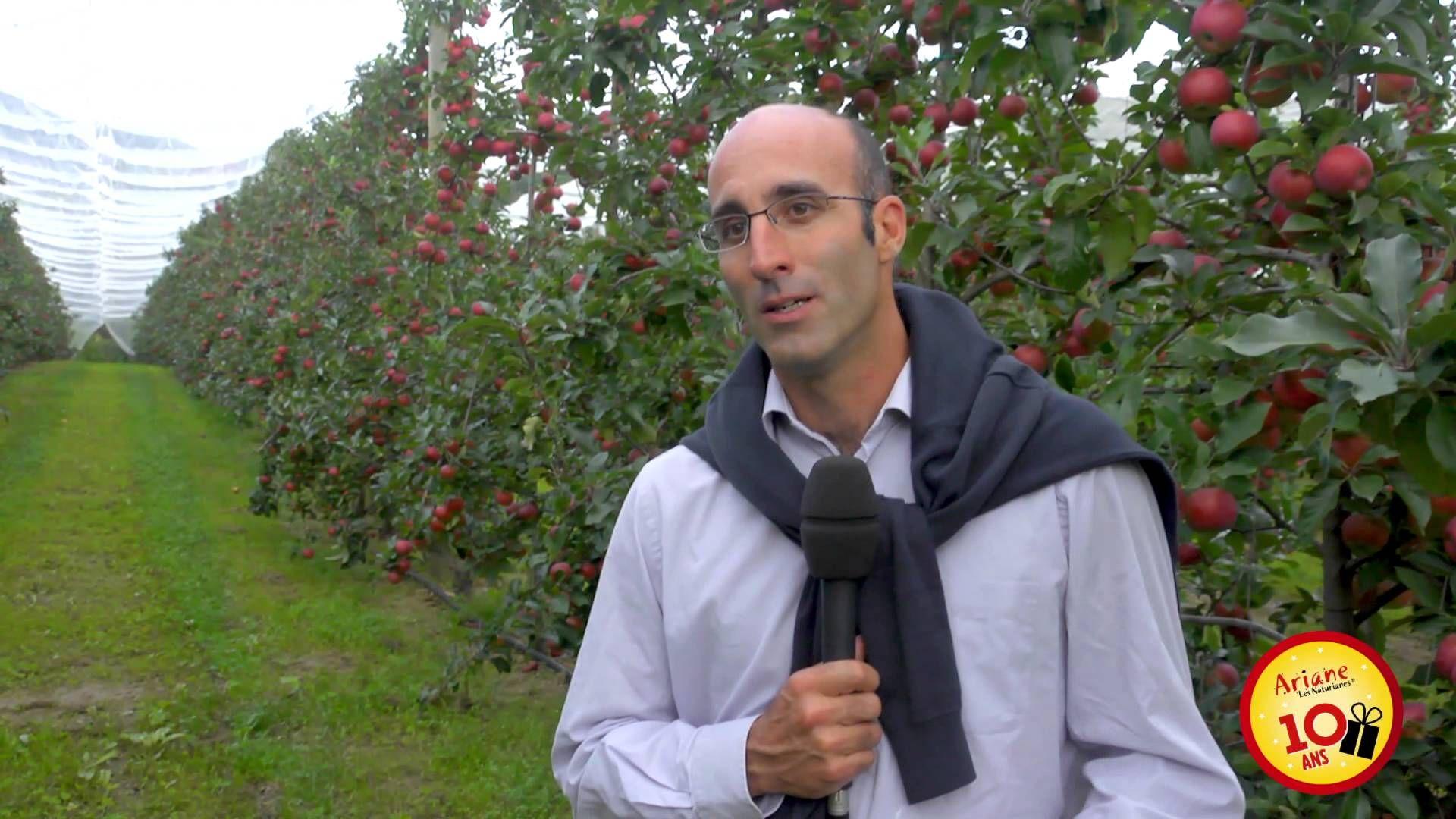 La pomme Ariane vue par ceux qui la font - Robert Cecchetti En septembre dernier, un voyage de presse a été organisé dans les vergers du coteau lyonnais pour fêter les 10 ans de notre belle pomme Ariane ! A cette occasion, les pomiculteurs d'Ariane racontent ce qu'ils aiment le plus chez leur pomme préférée.