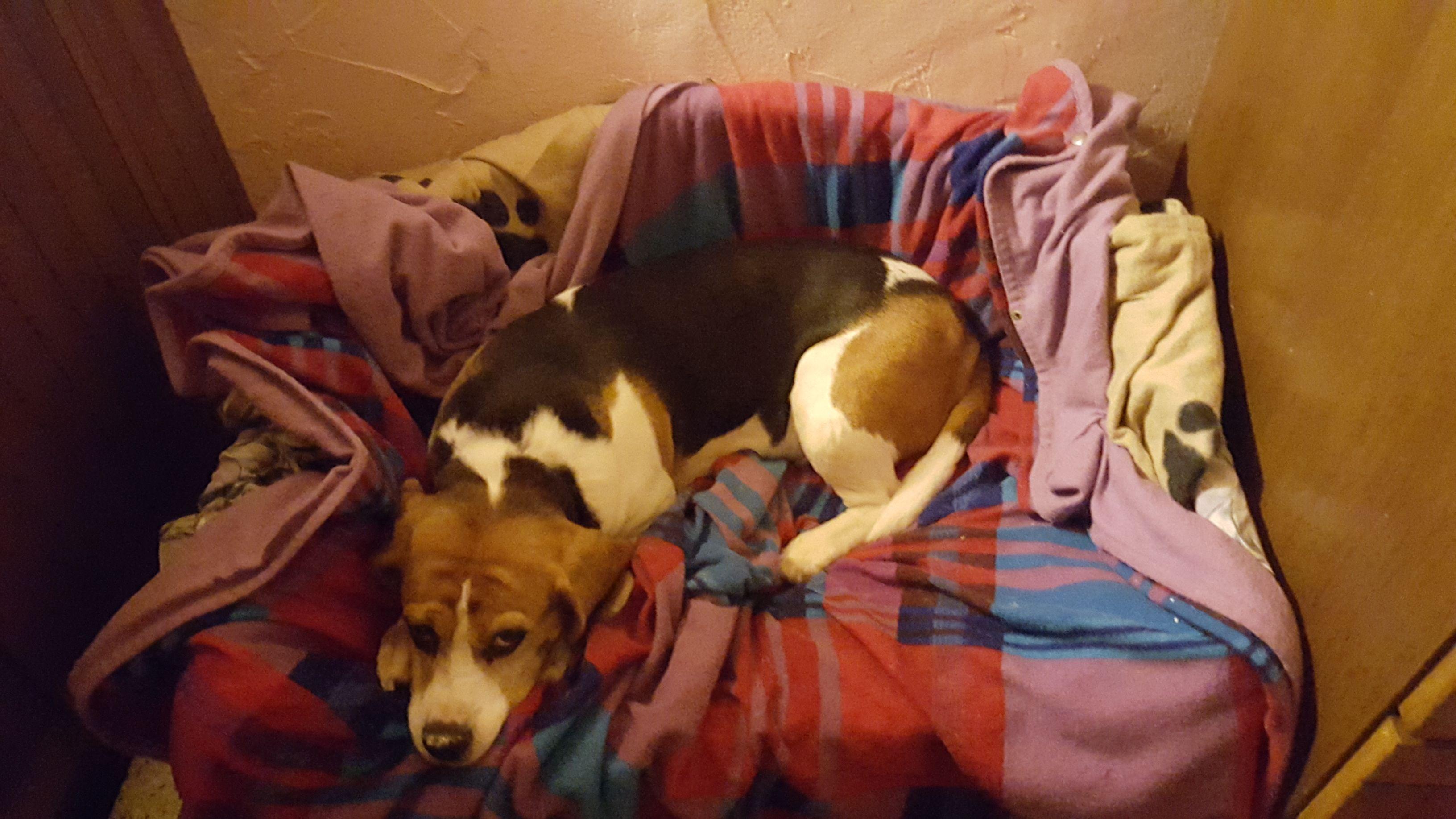 Hunde Foto: Monika und Julchen von Gipfelhorst - Meine