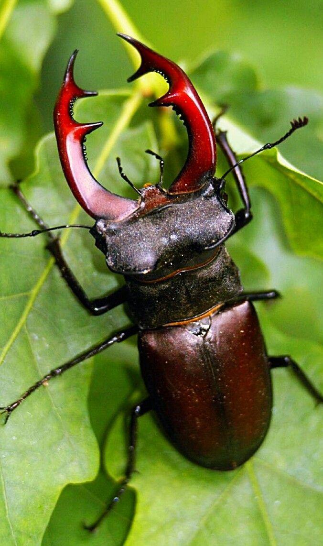 Все насекомые с картинками фото