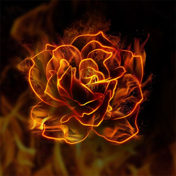 10 Steps To Create A Flaming Rose In Photoshop Rose On Fire Flame Art Fire Art