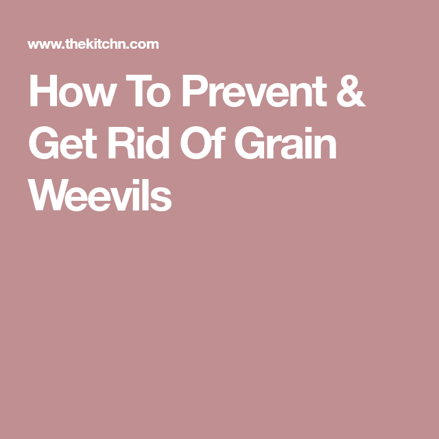 Best How To Prevent Get Rid Of Grain Weevils Brown Bugs 400 x 300
