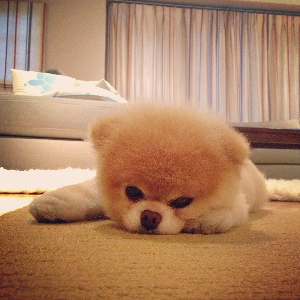 ^.^ just so cute