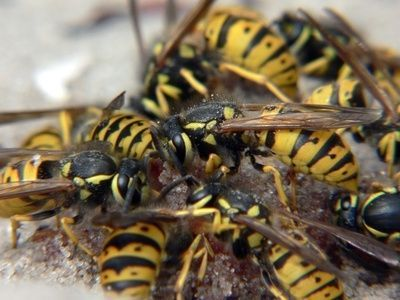 New Yellow Jackets In Basement