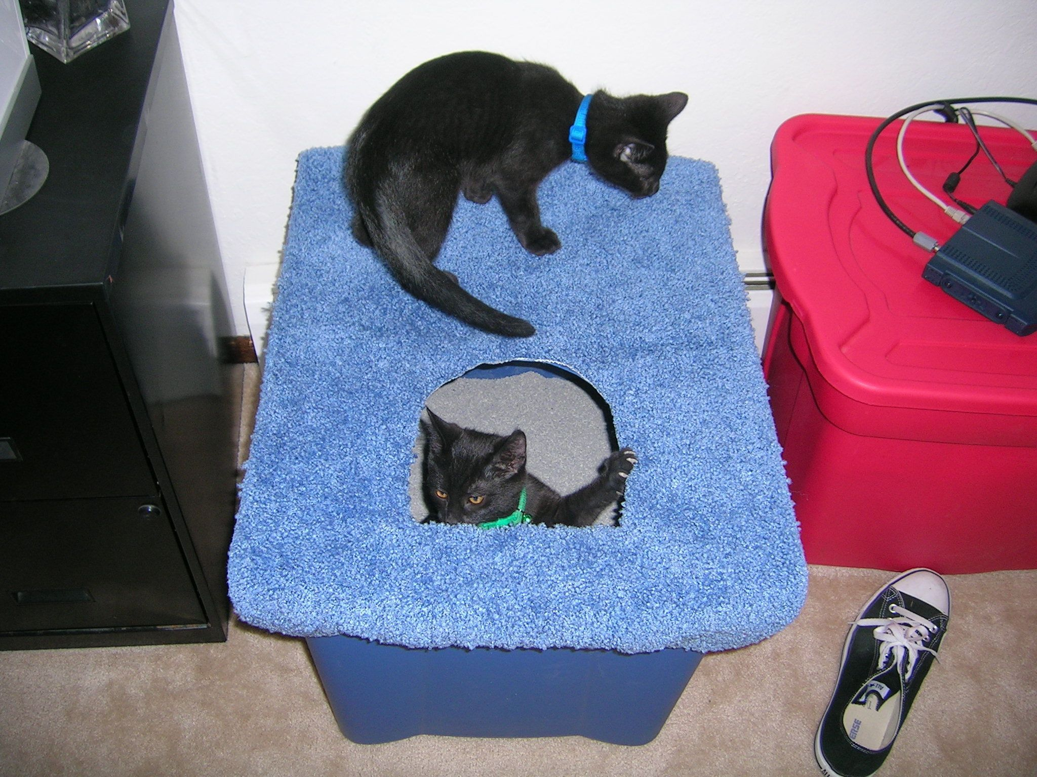 Tips For Training Your Cat Cat Litter Box Diy Cat Training Litter Box Diy Pet Care