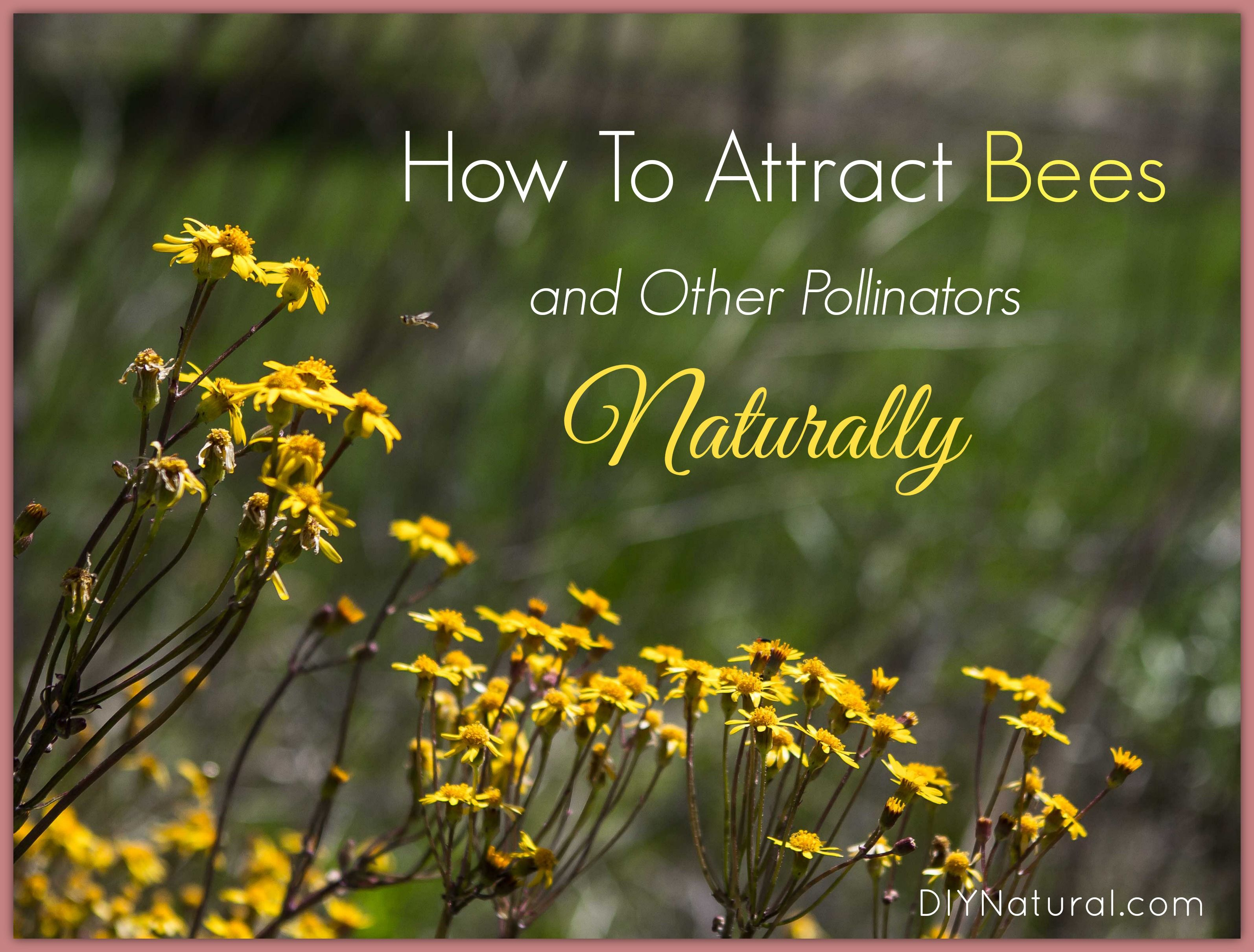 Learn how to attract bees and other pollinators naturally! It can be as simple as avoiding pesticides and planting flowers but there are many others ways too.