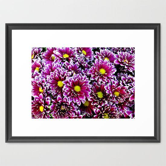 Purple, Pink, dahlias Framed Art Print
