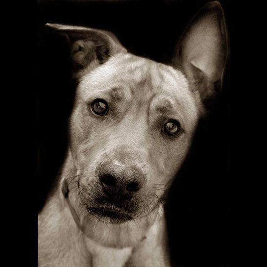 Shelter Dogs by Traer Scott