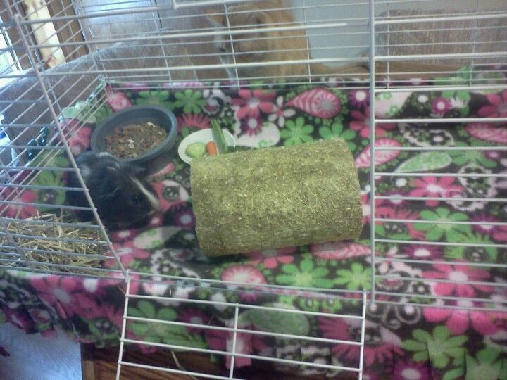 Fleece guinea pig cage easy to clean and no mess for How to clean guinea pig cages