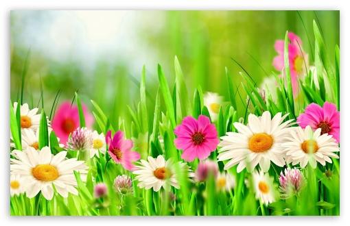 Easter Sunday 2014 Hd Wallpaper For 4k Uhd Widescreen Desktop