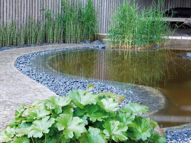 Teichpflanzen im Garten - Bambus am Teichrand water garden - japanischer garten bambus