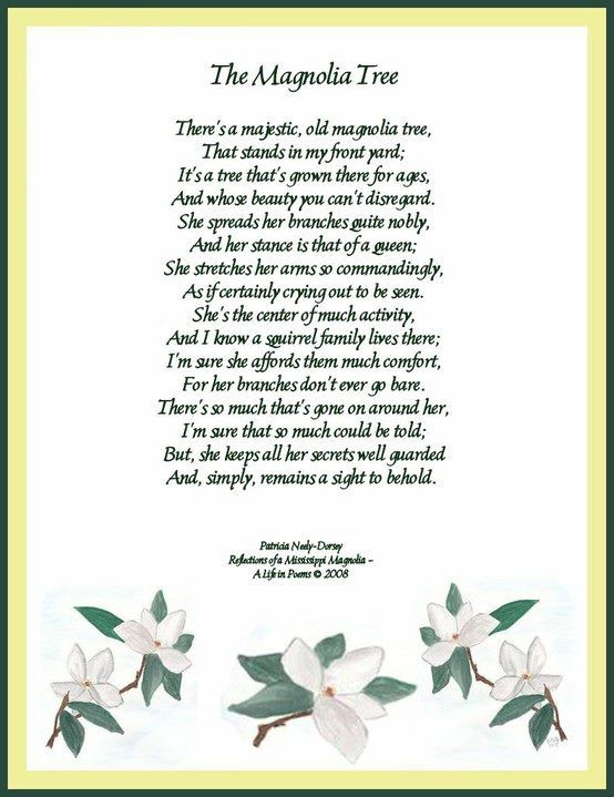 The Magnolia Tree Poem By Patricia Neely Dorsey Reflections Of A