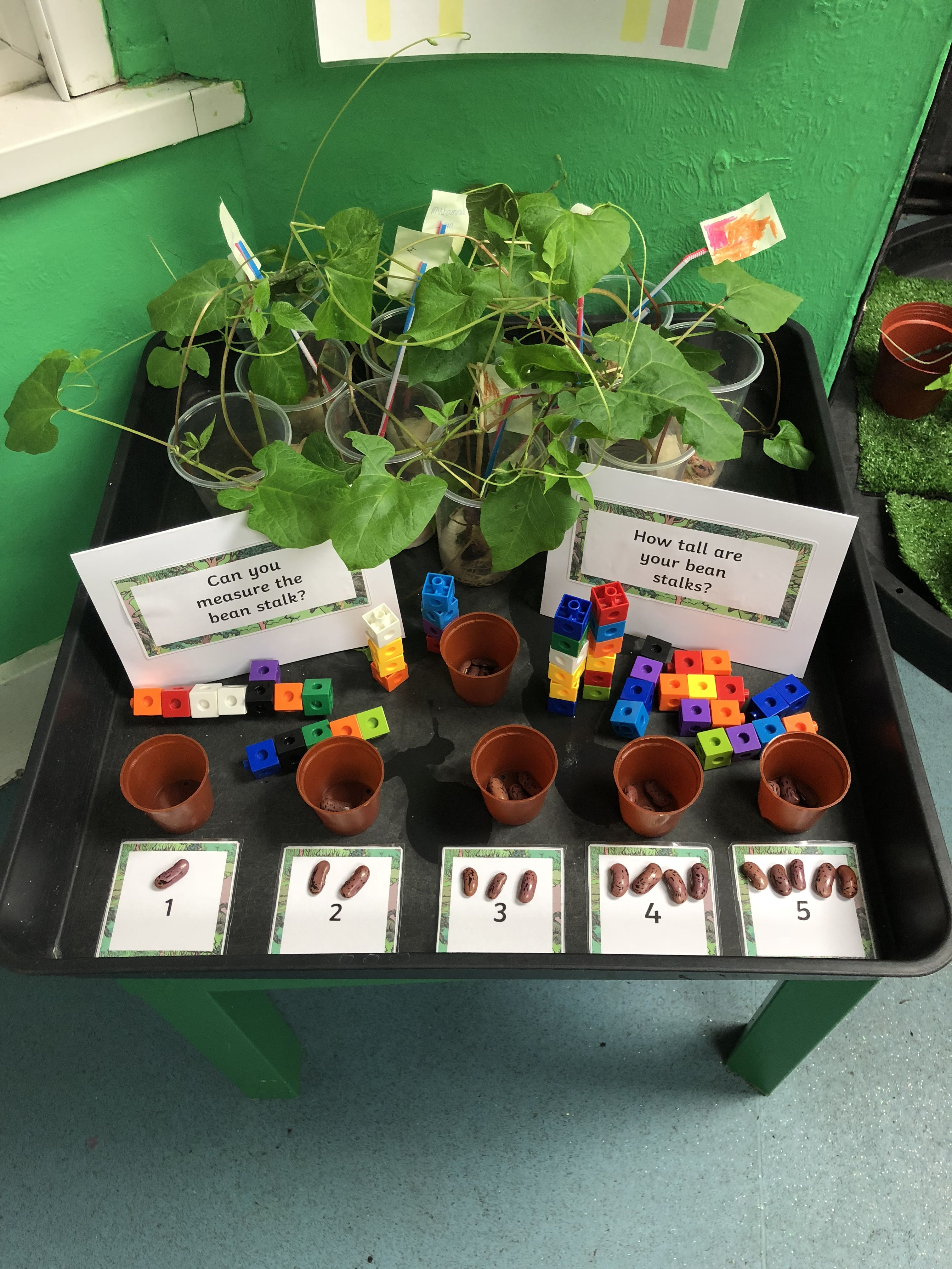 Maths Challenge Bean Stalks Counting Jack And The Bean