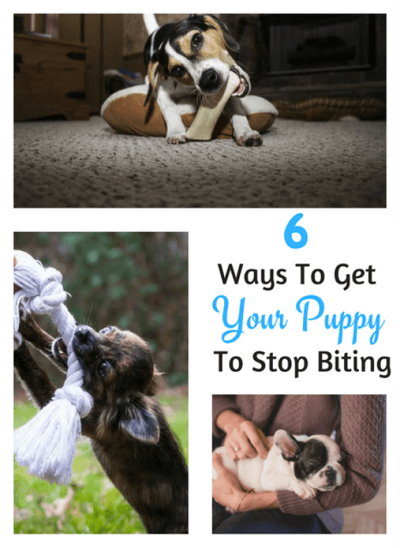 6 Actionable Tips To Get Your Puppy To Stop Biting In A Week Puppy Biting Dog Training Books Training Your Puppy