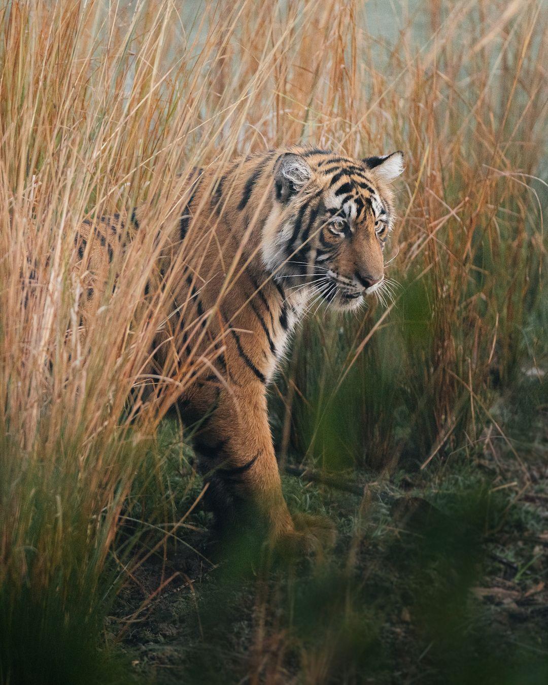 World Wildlife Day 2020 in 2020 Wildlife day, Wildlife