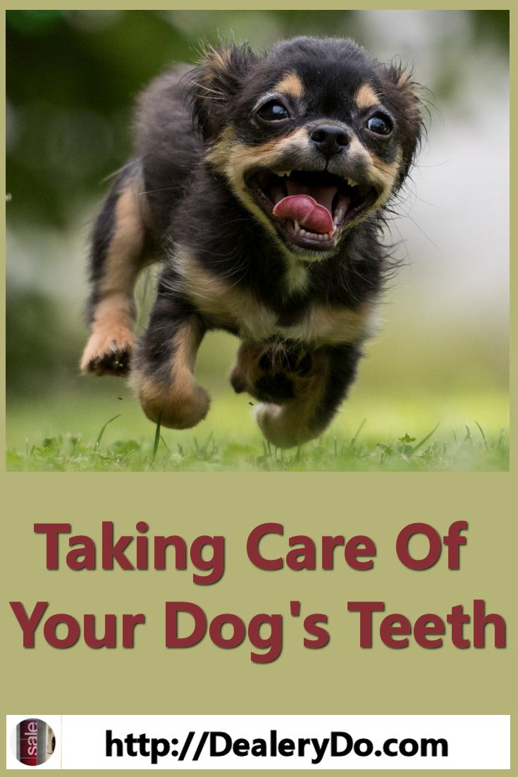 Taking Care Of Your Dog S Teeth Dealerydo Pinterest Dogs Pets