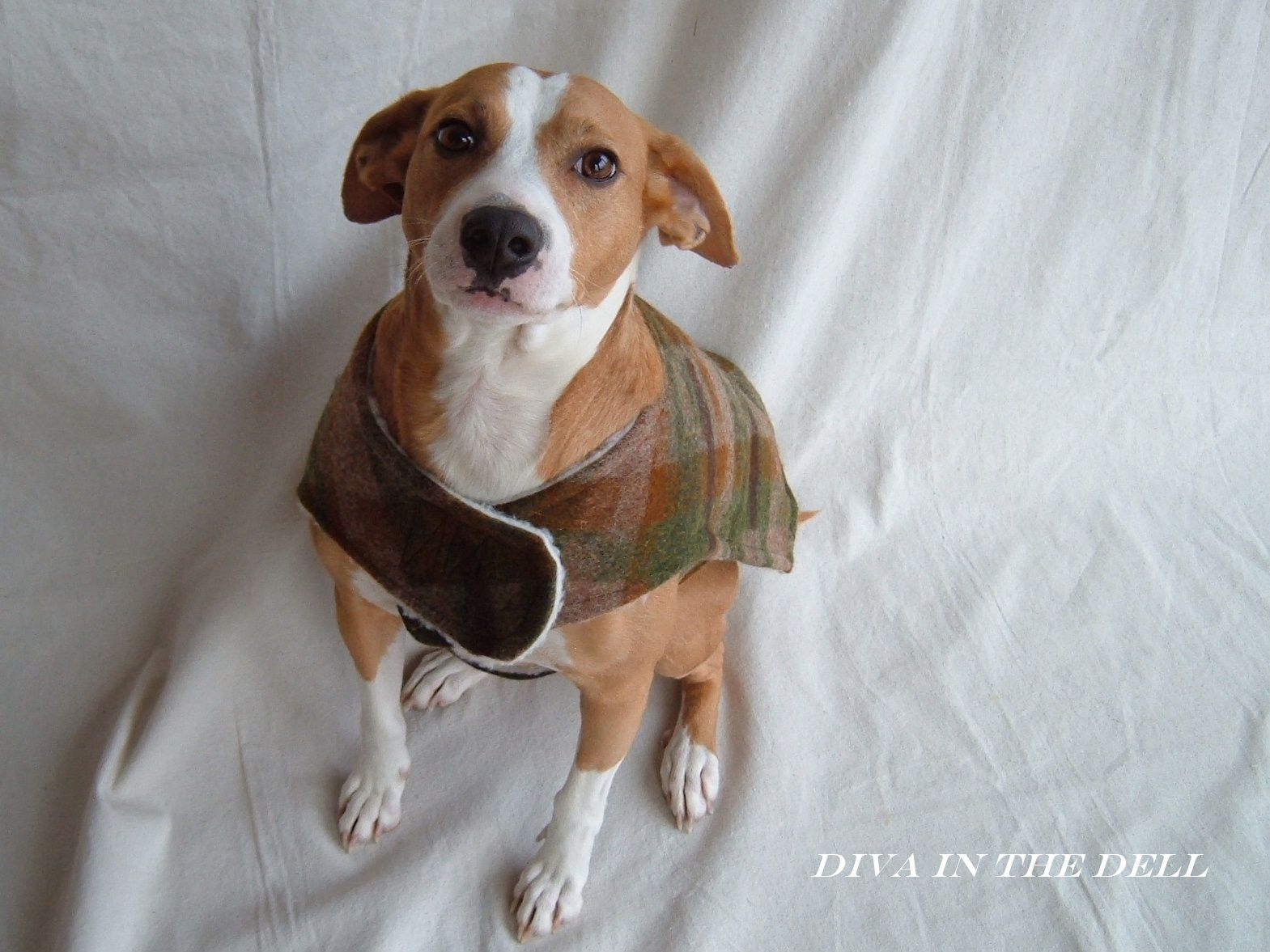 Diva Dawg Coats