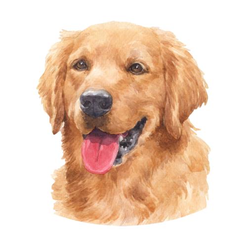 Beautiful Golden Retriever Watercolor Art In 2020 Golden Retriever Watercolor Golden Retriever Painting Watercolor Dog