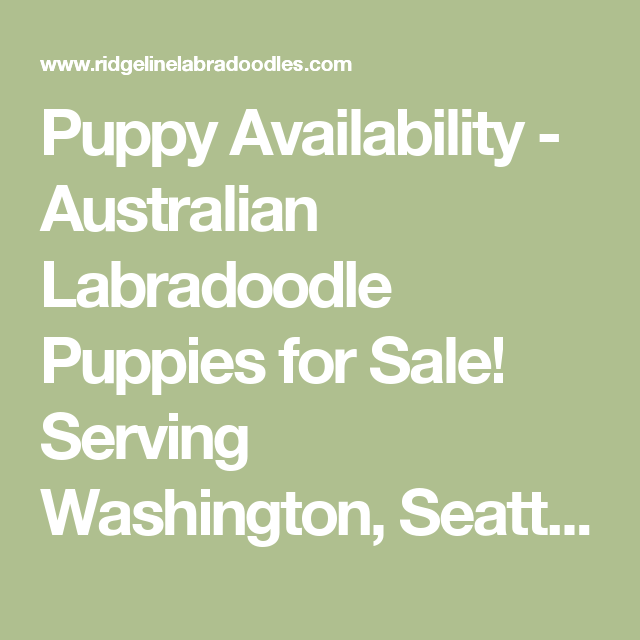Puppy Availability Australian Labradoodle Puppies for