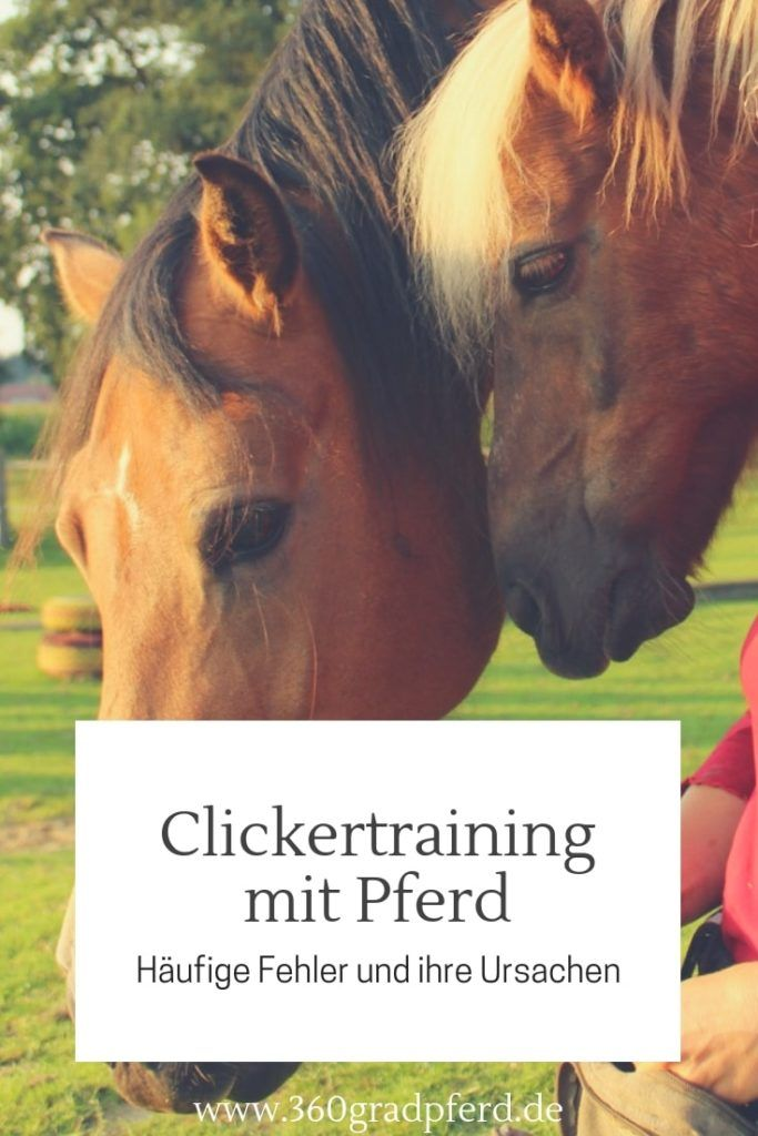 Bernd Hackl Im Interview Uber Leittiertheorie Und Fehler Am Pferd Ponys Horses Und Animals