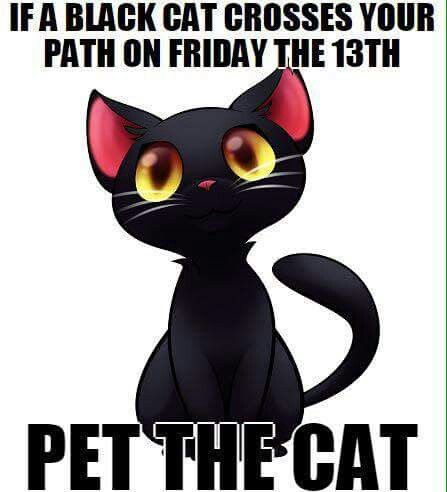 Image result for happy friday the 13th cat