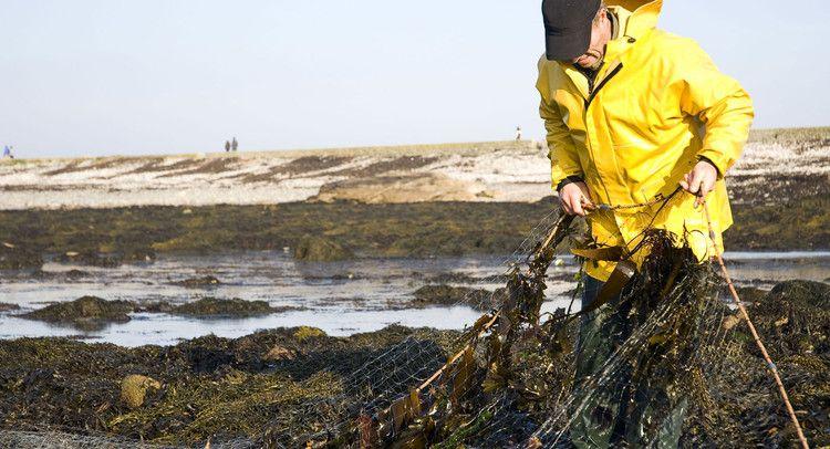 Bretagne, Ile de Sein : Pêcheur