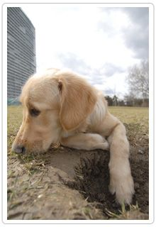Doggie Digging Have You Seeing Red Find Out Why Your Dog Digs And