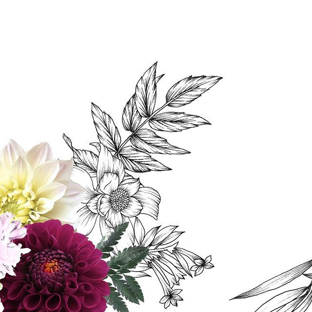 Dahlia with flower drawings by Typoflora