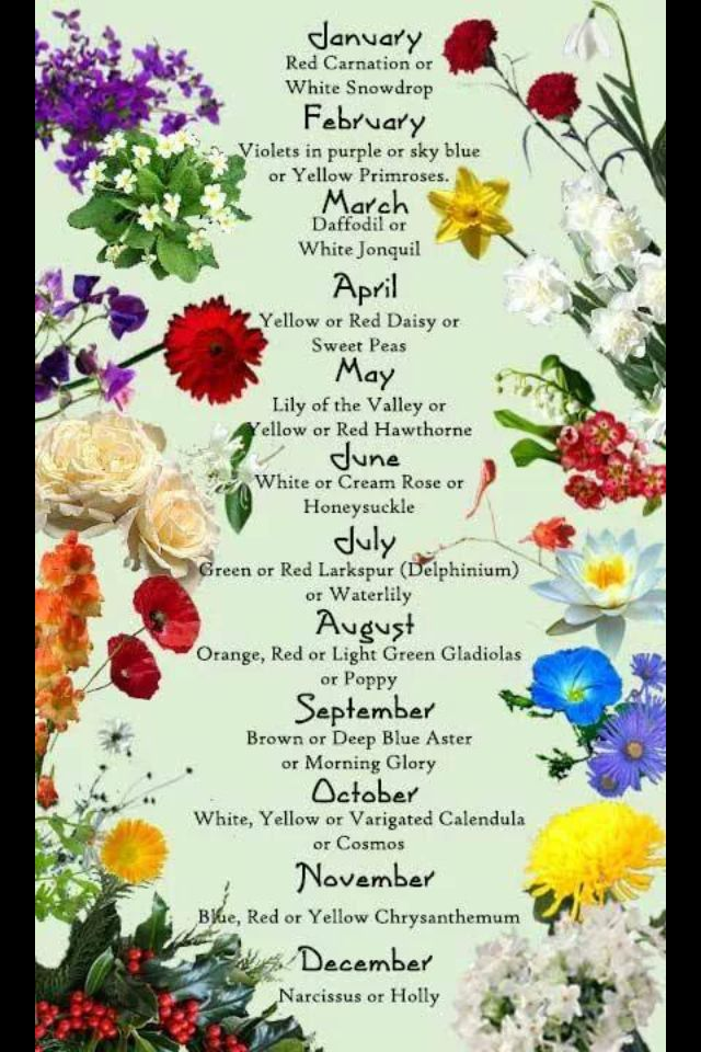 Flowers For Each Month Flowers Heal Body Mind Soul Try A