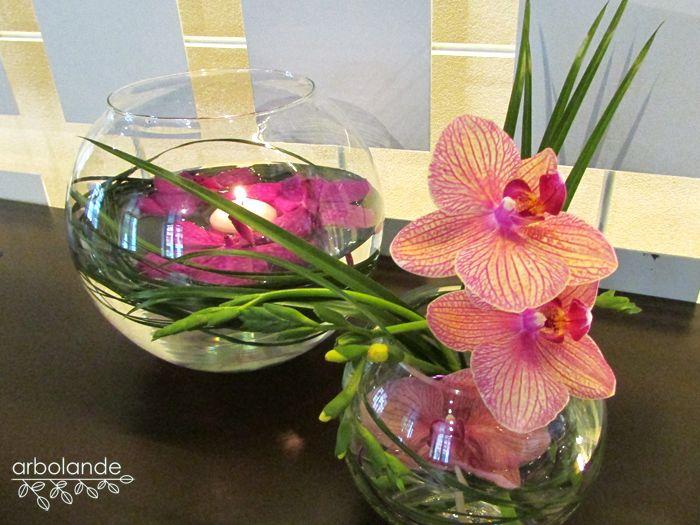 Orquídeas en Agua