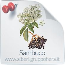 Sambuco - Elimina la bolletta, regala un albero - Gruppo Hera