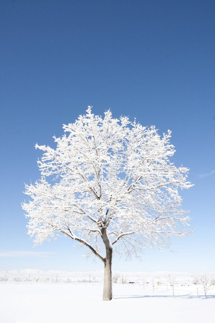 the amazing snow tree