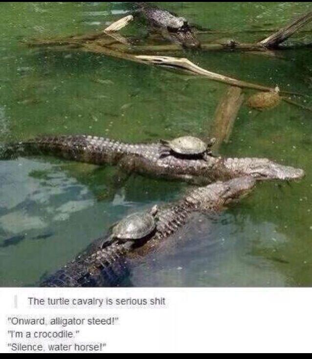 d20893fd9d729027c478d48d7e78e7a7 turtle cavalry onward alligator steed i'm a crocodile silence