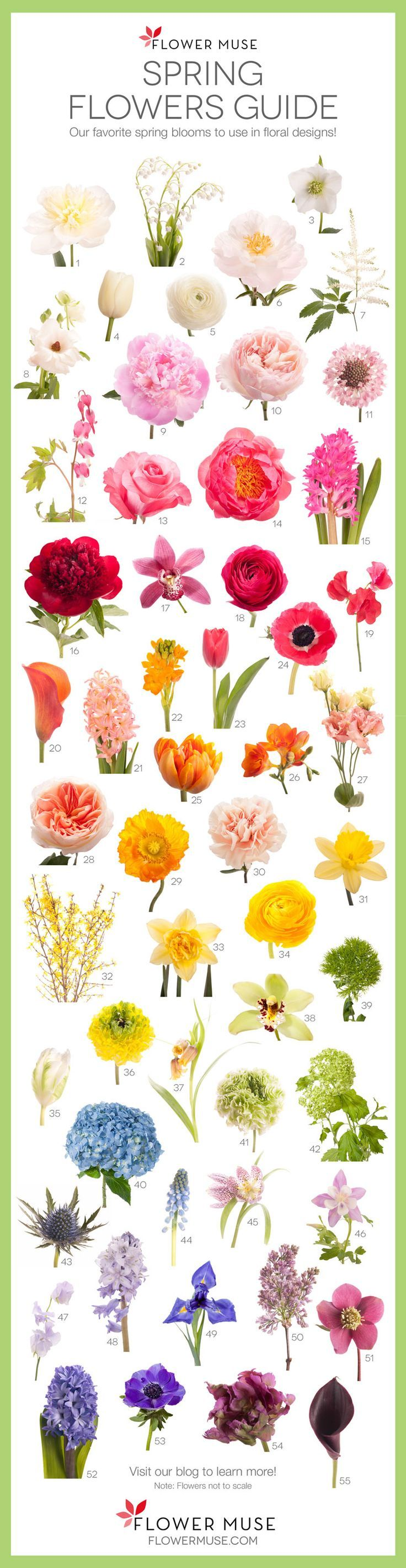 Blumen Floral design Ornament clipart - Blumenschmuck png herunterladen -  791*1024 - Kostenlos transparent Kunst png Herunterladen.