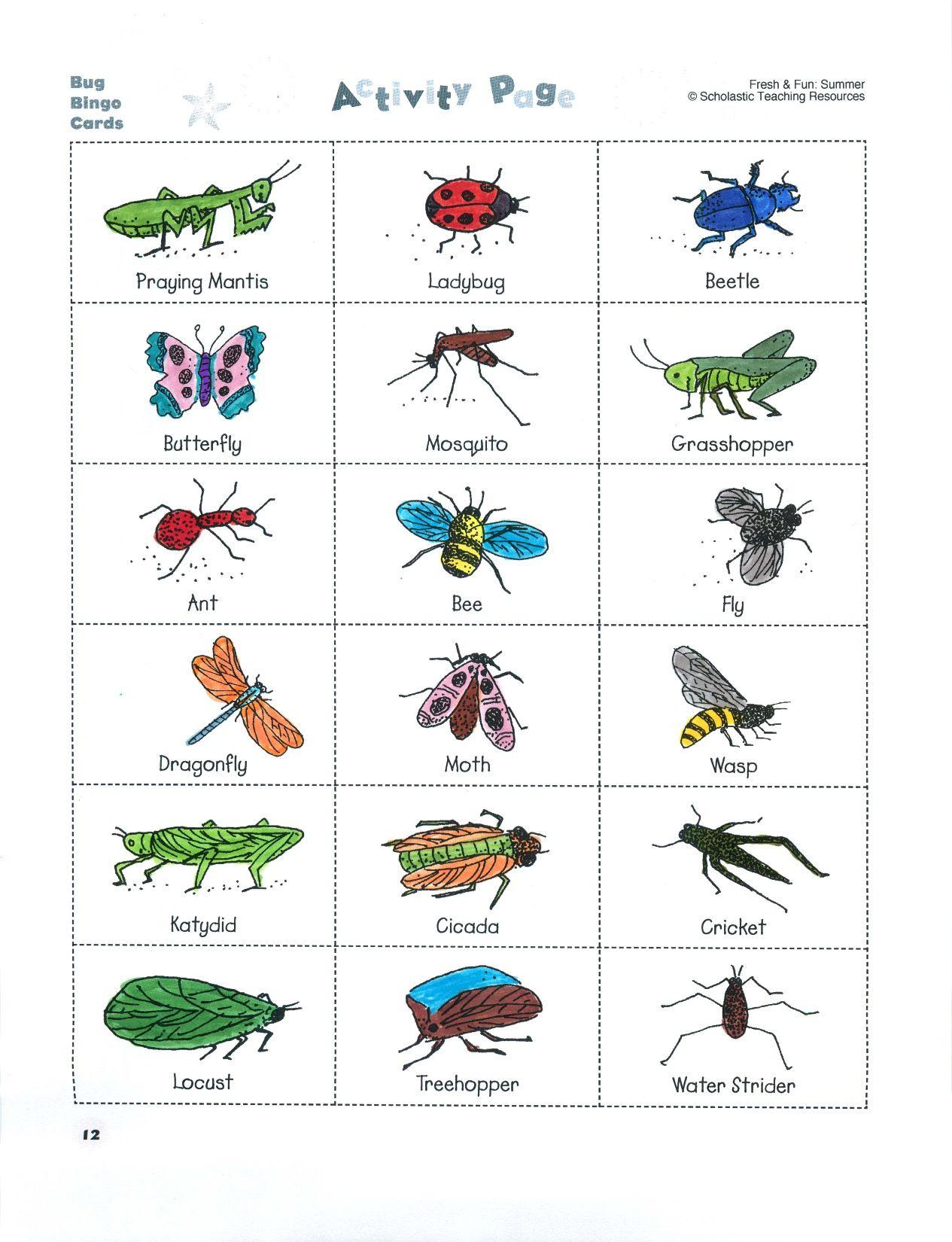 50 Arthropod Coloring Worksheet Quizlet