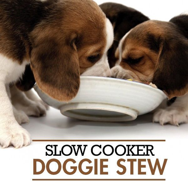 Slow cooker doggie stew recipe dog food recipes dog food and dog make ahead dog food this dog food recipe is made with healthy forumfinder Images